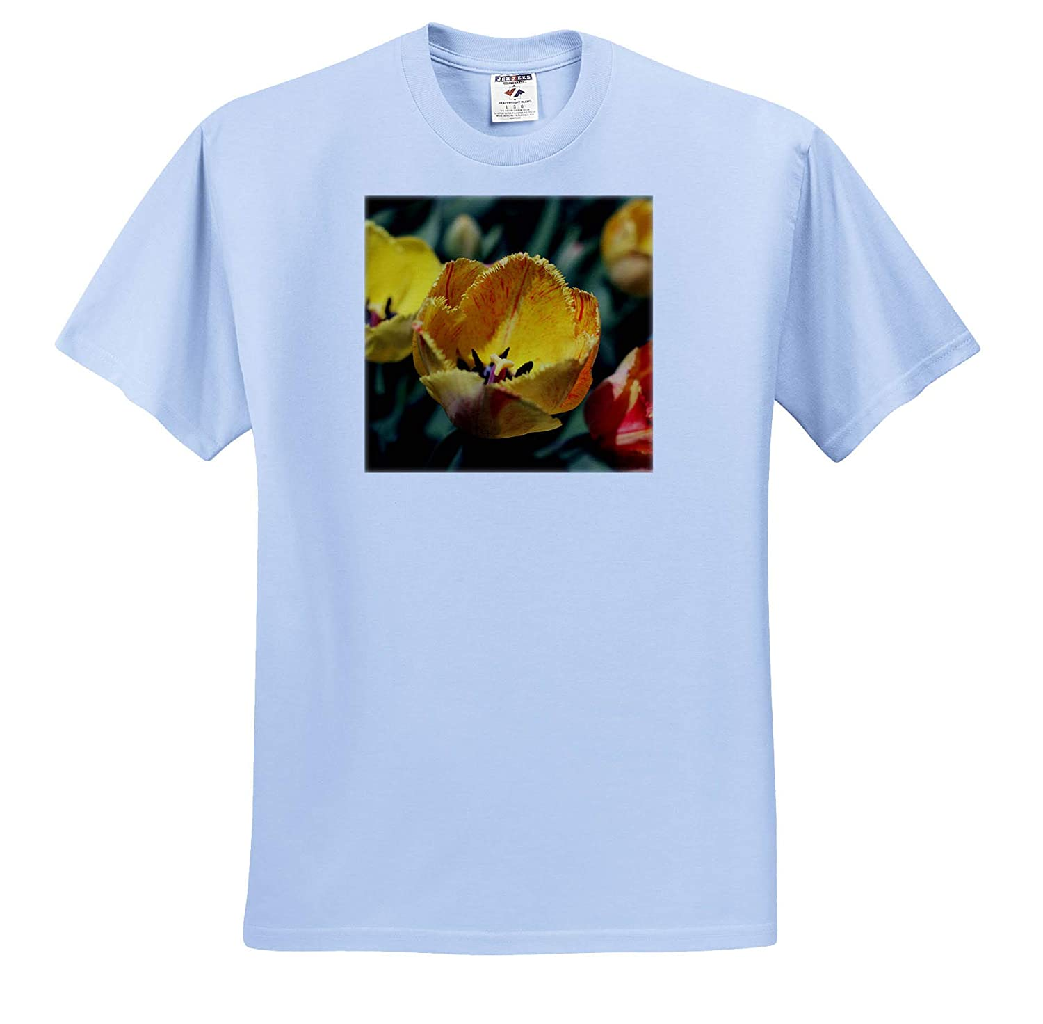 Flowers ts/_308740 - Adult T-Shirt XL Photograph of Elegant Fringed Yellow Tulips with red Stripes 3dRose Stamp City