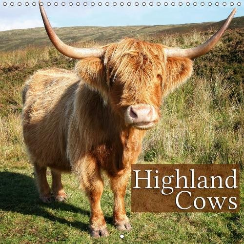 Highland Cows - Beautiful Portraits of The Cuddly Giants (Monthly Calendar 2019, 14 Pages, Size 12 inch Square -