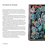 Stylish Succulents: Japanese Inspired Container