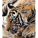 Mein großes Buch der Tiger