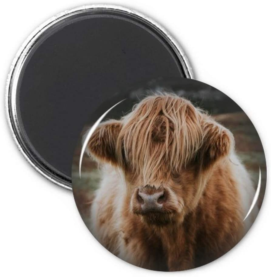 Terrestrial Organism Wild Animal Buffalo Refrigerator Magnet Sticker Decoration Badge Gift