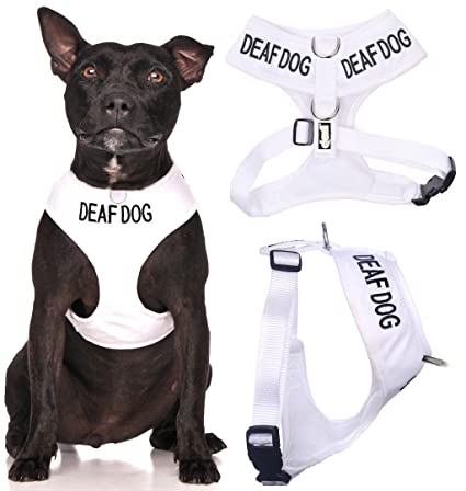 Amazon.com : Deaf Dog White Color Coded Waterproof Padded Adjustable