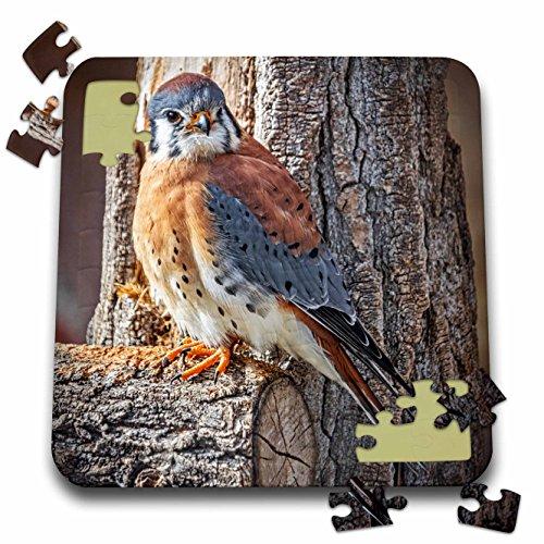 Game Birds Boehm (Boehm Photography Bird - North American Kestrel Bird on a Perch - 10x10 Inch Puzzle (pzl_239371_2))