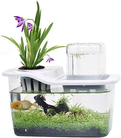 MUJING Jardin Aquatique, Aquarium Betta Qui Fait Pousser des ...