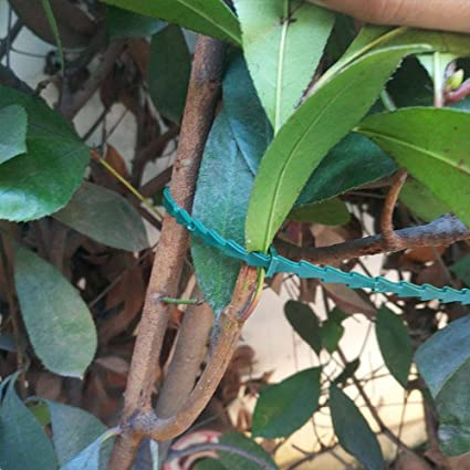 de pl/ástico TF 30PCS 17cm para jard/ín soporte de plantas Bridas ajustables para plantas arbustos