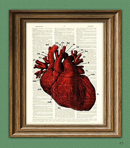 Heart Art Human (It's a RED HUMAN HEART diagram beautifully upcycled dictionary page book art print)