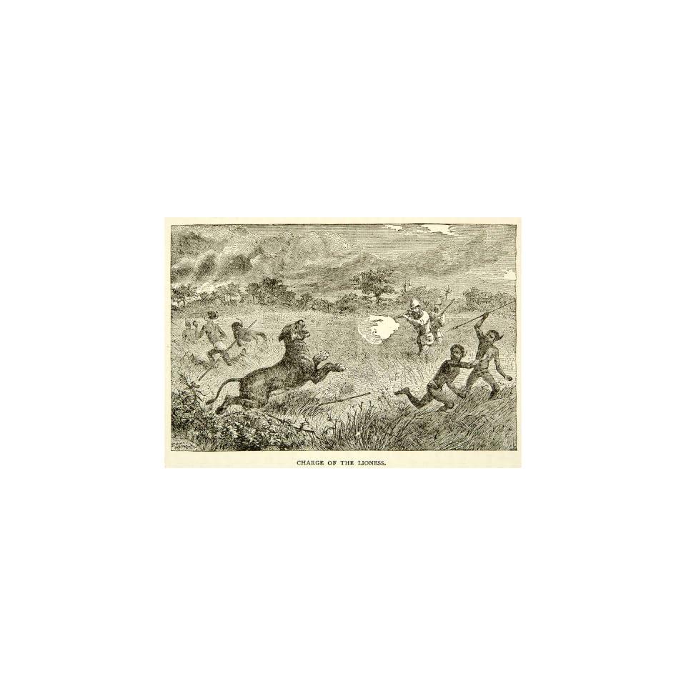 1884 Wood Engraving Lioness Hunt Native Big Game Africa Victorian Era Explorer   Original In Text Wood Engraving