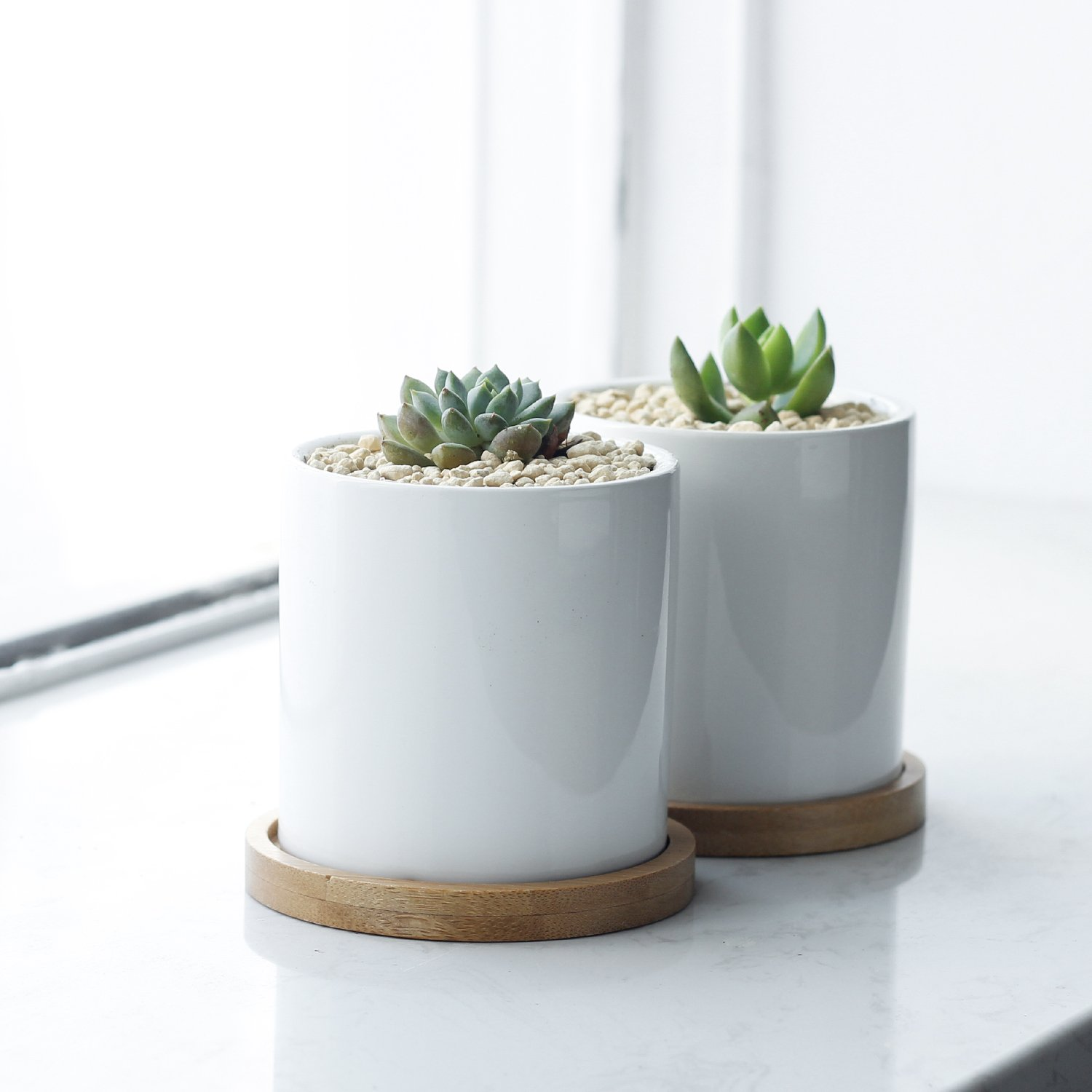 Greenaholics Succulent Plant Pots - 3 Inch Ceramic Cylindrical Containers, Small Cactus Planters, Flower Pots with Drainage Hole, Bamboo Tray, Set of 2, White by Greenaholics (Image #4)