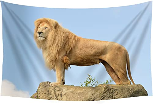 Lion sky rocks Animals – Wall Tapestry Art For Home Decor Wall Hanging Tapestry 60×40 Inches