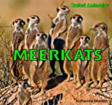 Meerkats (Safari Animals)