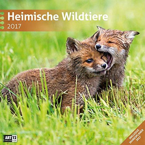 Heimische Wildtiere - Kalender 2017 - Ackermann-Verlag - Art12 Collection - Broschurkalender - Wandkalender - 30 cm x 30 cm