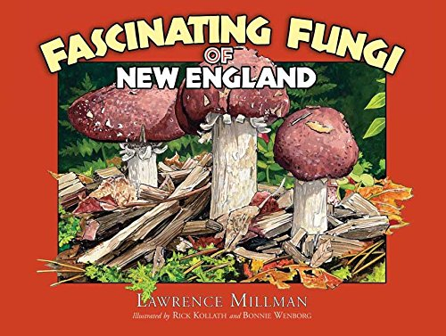 fascinating-fungi-of-new-england
