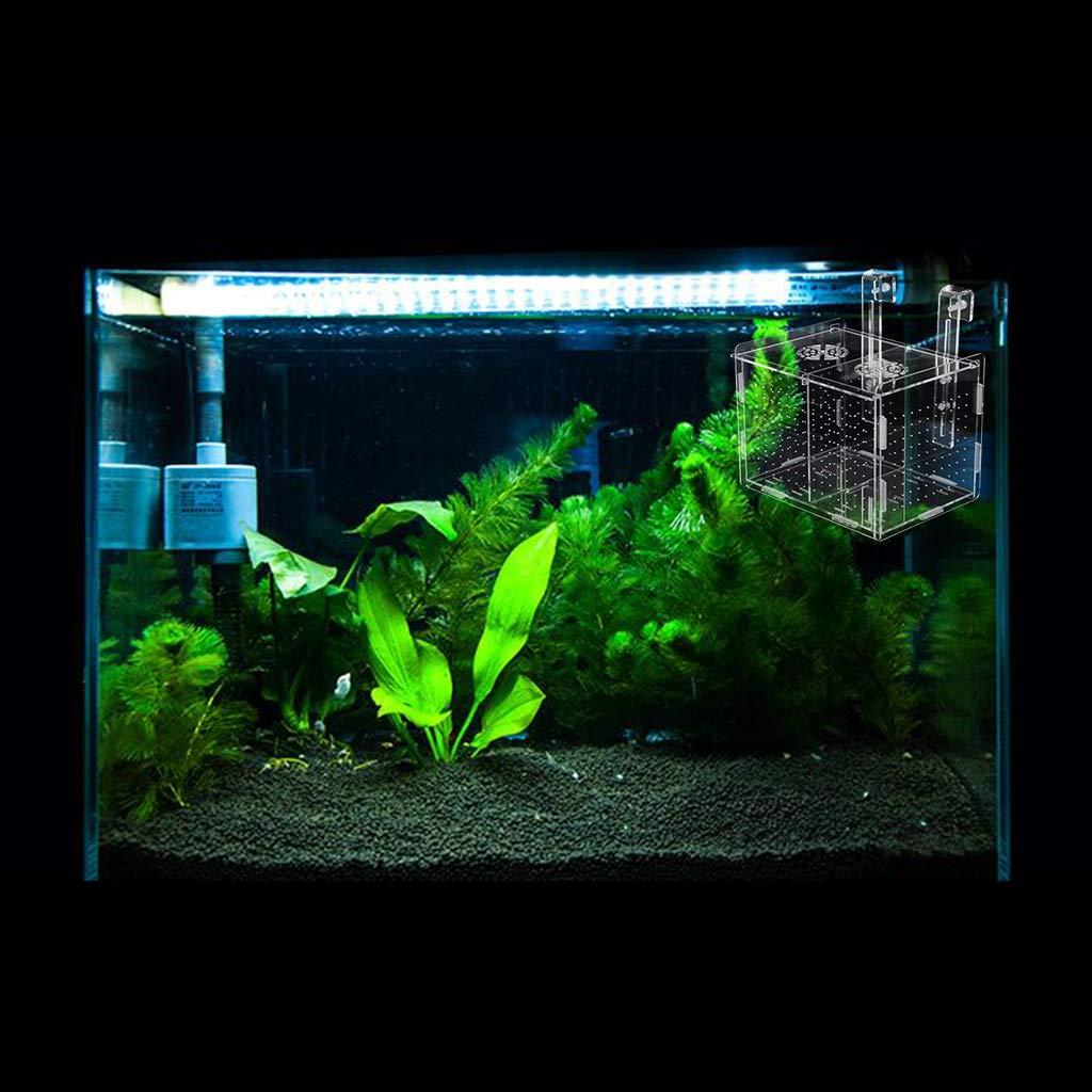 B Blesiya Aislante Caja Transparente Acuario Plástico Accesorios de Animales Pequeño Elegante: Amazon.es: Productos para mascotas