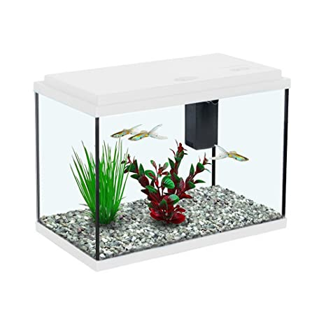 All Pond Solutions - Estanque para Peces de Cristal Aquatlantis Funny Fish 35 para Acuario de