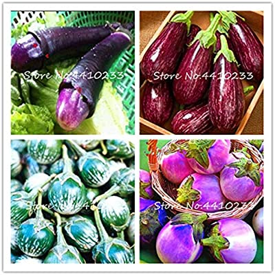 Kalash Nuevos 100pcs semillas de vegetales de la berenjena por un ...