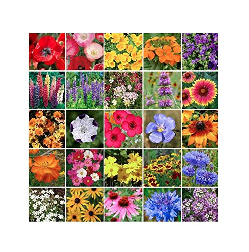 Southeast Wildflower Seed Mix - Annuals and Perennials