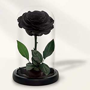 Preserved Roses in Glass Dome, Long Lasting Black Roses Real, Glass Flower Rose for Valentine's Day, Christmas, Mother's Day, Birthday, Anniversary, Wedding, Thanksgiving