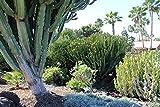 LAMINATED POSTER Landscape Cactus Cephalocereus Nature Plant Poster Print 24 x 36