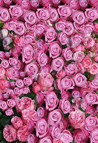 AOFOTO 4x6ft Valentine's Day Photography Backdrop Romantic Pink Rose Background Fresh Dew Flower Wedding Photo Studio Props Bridal Shower Woman Lady Girlfriend Adult Artistic Portrait Vinyl Wallpaper