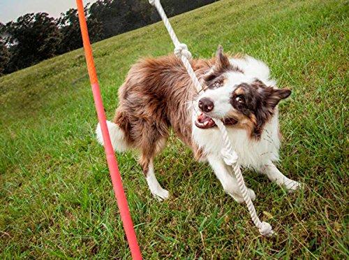 Tether Tug Interactive Dog Rope Toy (Medium)