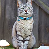 Didog 6 Pcs Safety Cat Collars,Breakaway Cats