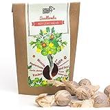 Espresso Mushroom Company Hot Leaf Salad Seedbomb
