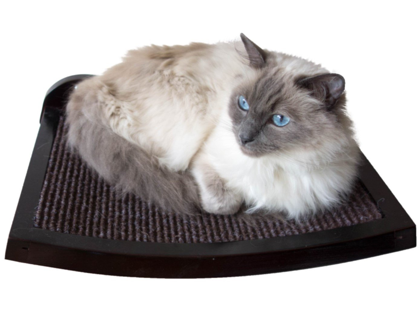 Amazon Art Of Paws Cat Shelf Cat Perch Cat Bed With Curved