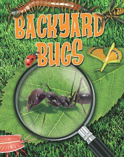 Read Online Backyard Bugs (Crabtree Connections) ebook