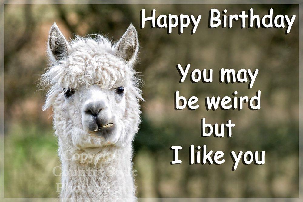 Happy Birthday Alpaca Funny