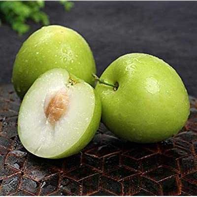 20pcs Seeds Chinese jujube- Giant Green Jujube Plant Sweet Fruit Plant Rare Exotic Bonsai Potted Gift Plant Decoration Home Garden : Garden & Outdoor
