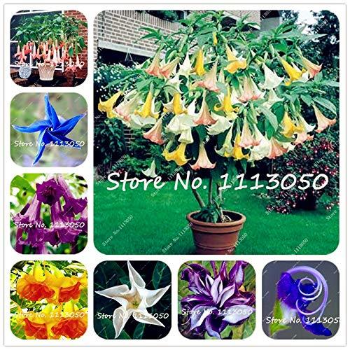 Kasuki 100Pcs Rainbow Brugmansia Datura Bonsai, Dwarf Brugmansia Angel Trumpets Bonsai Flower Tree, Rare Potted Plant for Home Garden - (Color: Mixed)