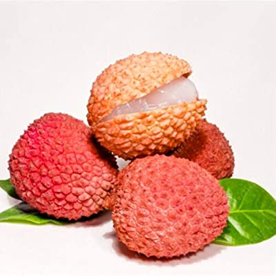 airrais 5 Pcs Litchi Seeds Liquique Lychee Seeds Garden Bonsai Planting Rare Fruit Tree Seeds Flowers : Garden & Outdoor