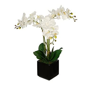 best selling House of Silk Flowers Orchid