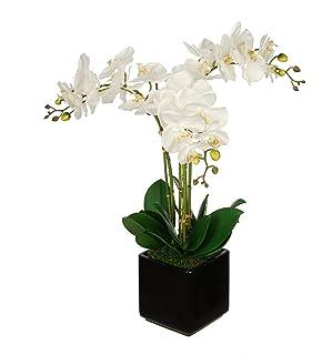 Amazon house of silk flowers artificial succulent garden b in house of silk flowers artificial white triple stem orchid in cube vase black mightylinksfo