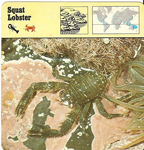 - 1975 Editions Rencontre, Animals Card, 12.268 Squat Lobster