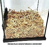 Pangea New Zealand Long Fiber Sphagnum Moss