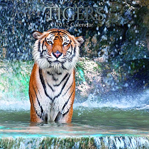 "Majestic Animals - Tigers 2017 Monthly Wall Calendar, 12"" x 12"""