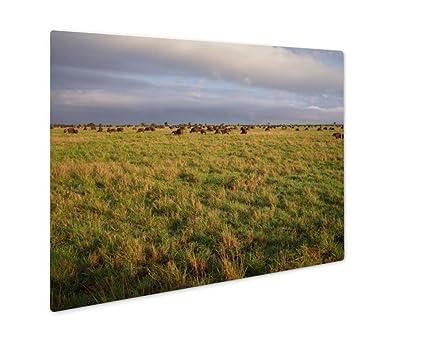 amazon ashley giclee metal panel print safari in kenya wall