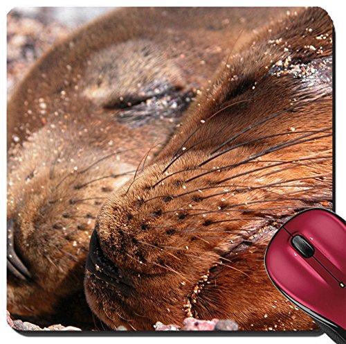 Liili Suqare Mousepad 8x8 Inch Mouse Pads/Mat IMAGE ID: 2165916 Seals cuddling - Cuddling Mat