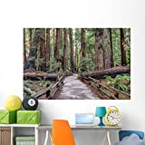 Muir Woods National Monument Wall Mural by Wallmonkeys Peel and Stick Graphic (72 in W x 48 in H) WM338758