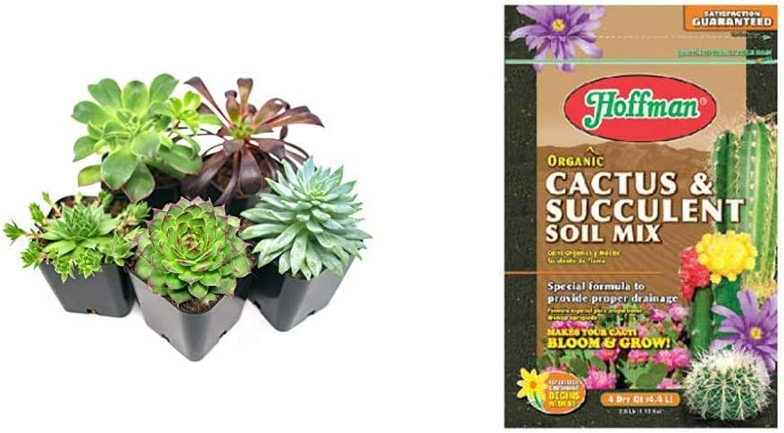 Succulent Plants (5 Pack), Fully Rooted in Planter Pots with Soil - Real Live Potted Succulents / Unique Indoor Cactus Decor & Hoffman 10404 Organic Cactus and Succulent Soil Mix, 4 Quarts, Brown/A