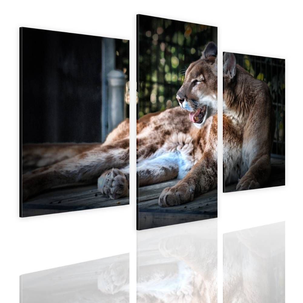 Alonline Art - Cougar by Split 3 Panels | framed stretched canvas on a ready to hang frame - 100% cotton - gallery wrapped | 33''x22'' - 84x56cm | Wall art home decor for office or for dining room |