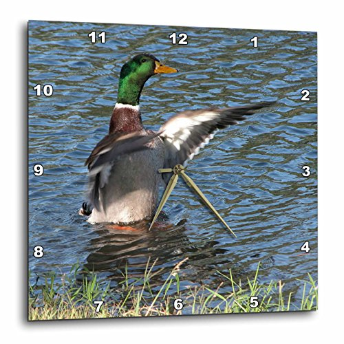 3dRose DPP_11537_3 Drake, Male Mallard Duck Wall Clock, 15 by 15-Inch