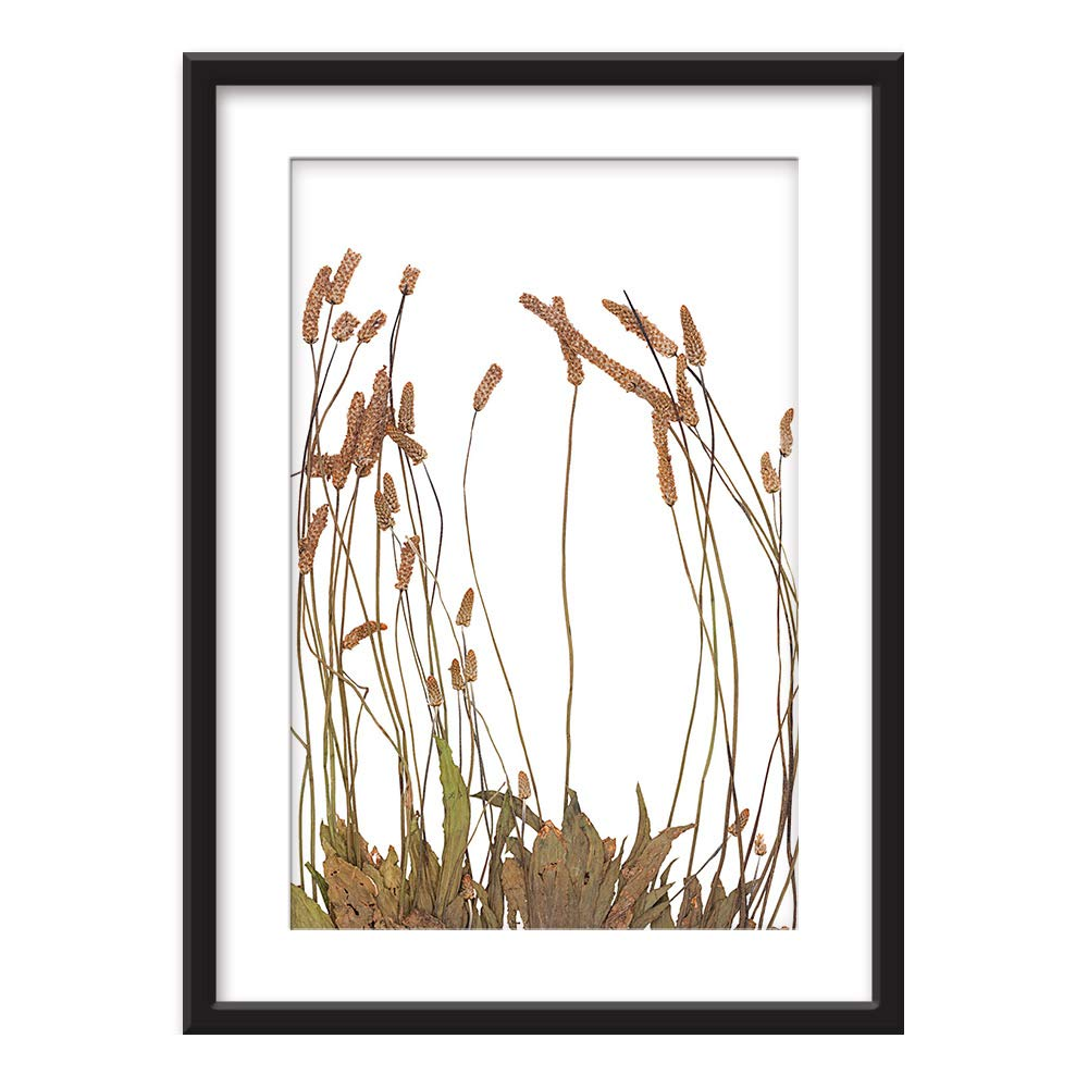 Framed Dried Plant Specimen Ed Art In Black Picture Frames White