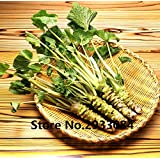 Portal Cool 200Pcs Lot Wasabi Seeds Japanese Horseradish Seed Vegetable for Planting Easy S
