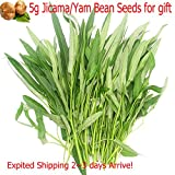 Kafai Aquatica Garden Vegetable Green Organic Chinese Seeds 20g For Planting Outside Door For Cooking Dish Soup Taste Good Delicious Expited Shipping 2~3 days Arrive
