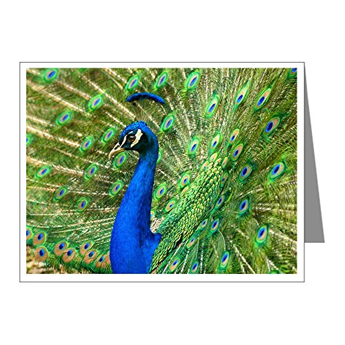 - X-Large Greeting Card (10 Pack) Peacock with Beautiful Plumage