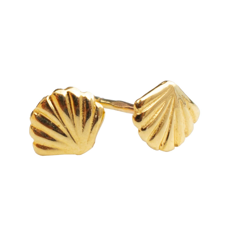 Shell Earrings Dove Shell Drop Earrings Seashell Earrings 14k Gold Filled Earrings