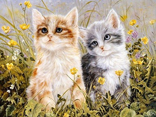- Colour Talk Diy oil painting, paint by number kit- Two Cats with Flowers 1620 inch.