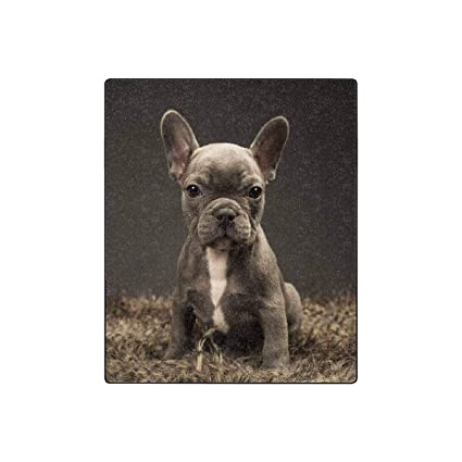 Amazoncom Interestprint Baby French Bulldog Cute Puppy Luxury